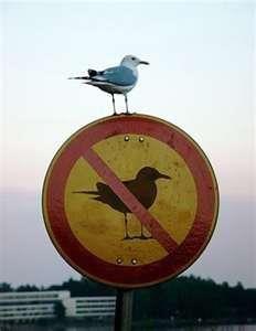 bird cognitive dissonance