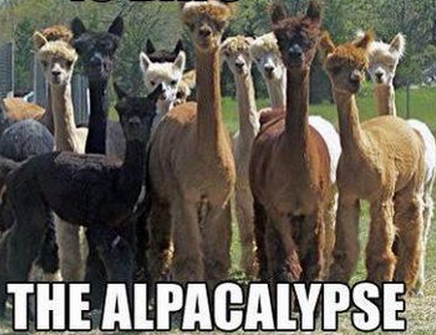 the alpacalpyse