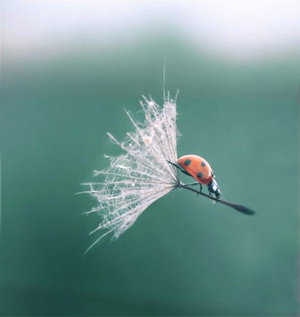 ladybug-dandelion-perfect-timing
