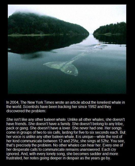 sad lonely whale cannot communicate