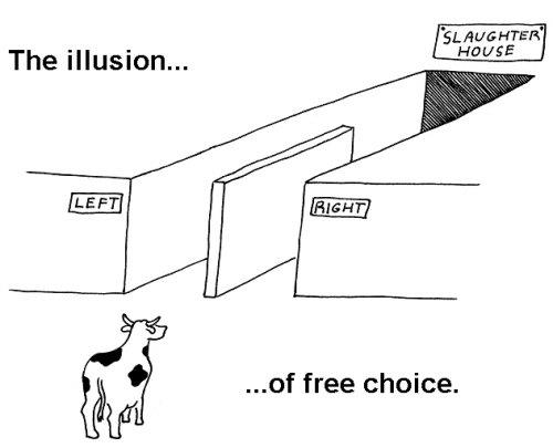 the illusion of free will