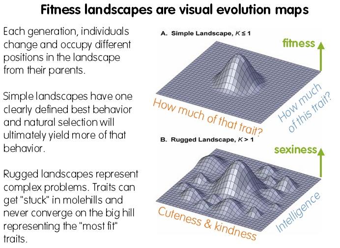 fitness-landscapes