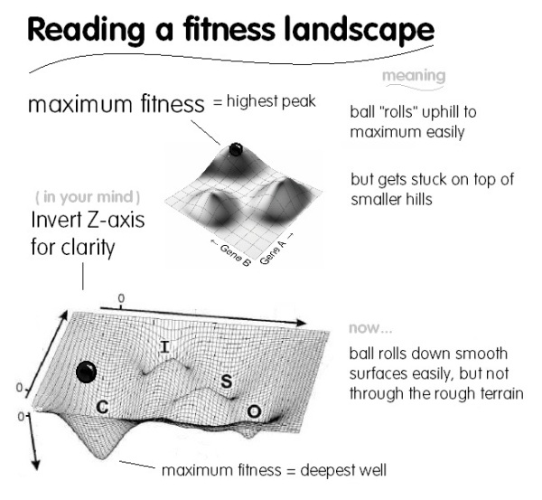 reading a fitness landscape