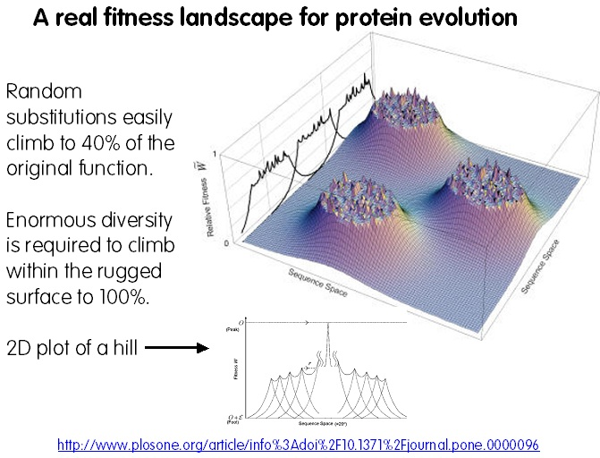 real-fitness-landscape-protein-evolution-barrier