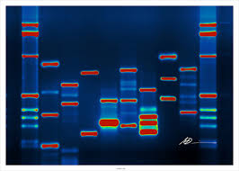 human-genome
