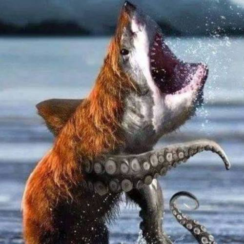 dog-shark-octopus