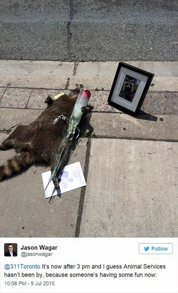dead-racoon